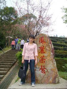 鹿谷櫻花步道