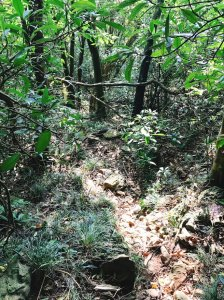 09/20白雲山幾乎無路線爬山體驗