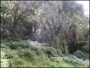 嘉義。特富野古道。鐵道森林最美的步道