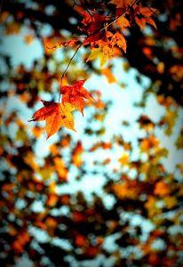 * 望見 玉山 之巔 ~ 秋冬之際;塔山 步道