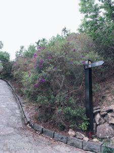 梅嶺風景區