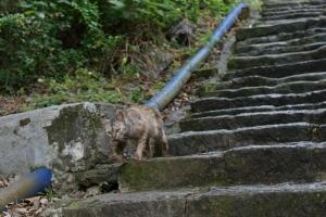 【步道小旅行】天母水管路步道