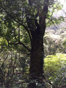 絹絲瀑布上竹篙山