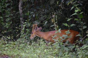 泰國拷艾國家公園
