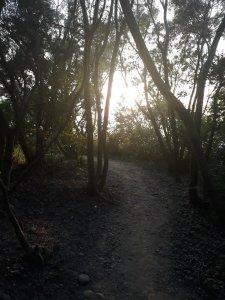 大肚環保公園步道
