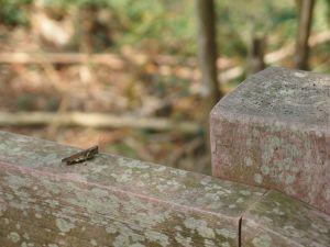 新田登山步道(聚興山)