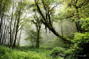【南投】忘憂森林登金柑樹山