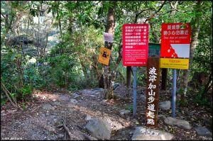波津加山頂的玉山杜鵑開花了!