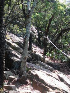 金面山親山步道