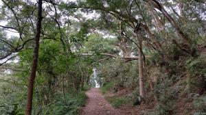 彰化縣田中鎮-田中森林登山步道