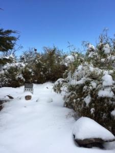 【公告】玉山地區降下三月瑞雪,將持續進行雪地管制