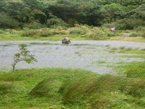 狂風舞動向天池