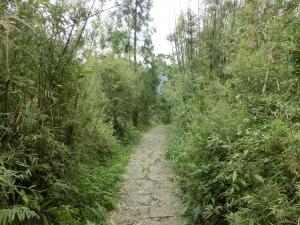 大崎頭步道.坪頂古圳步道
