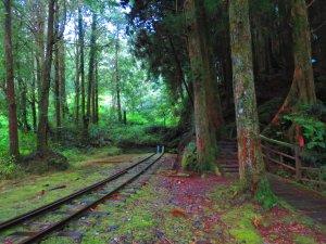 走水山巨木步道 與千年神木對話