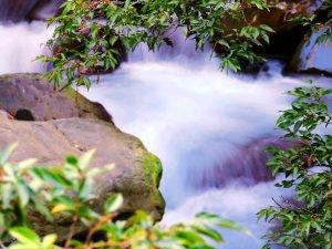 深秋武陵農場之旅(1)桃山瀑布步道
