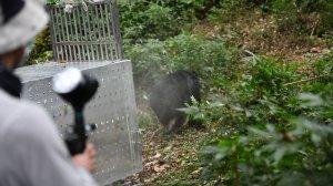 【新聞】感動與祝福中 東卯山救傷黑熊順利野放!