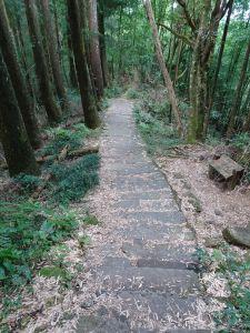 台灣小百岳第54座-南投鹿谷金柑樹山