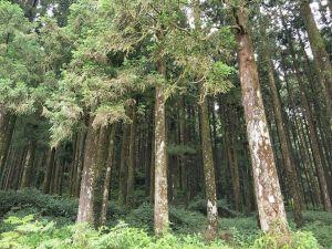 二萬坪山登山步道、二萬坪(黑森林)步道