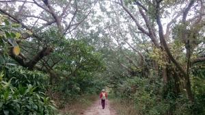 猴群榕蔓駐壽山