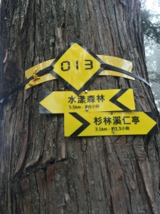 鹿屈山 X 水漾森林