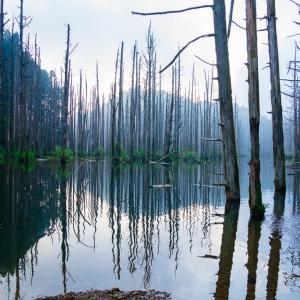 【步道小旅行】我的心遺留在水漾森林