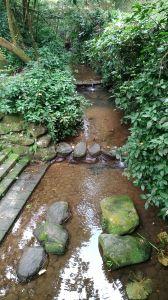 虎山溪自然步道!