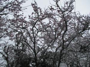拉拉山之雪