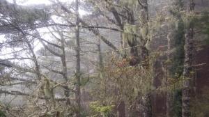 風雨中朦朧的嘉明湖