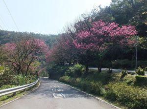 【新北市】大尖山山櫻漂染