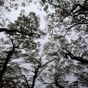 20141031迷霧森林尖石內鳥嘴山