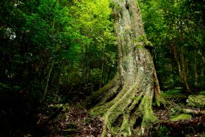 波津加:北上大雪山森林
