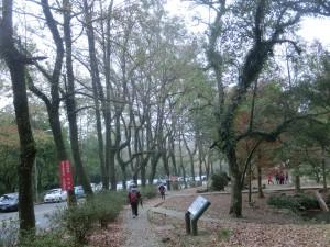 溪洲公園.石門大壩.賞楓步道