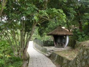 樟樹步道.波斯菊