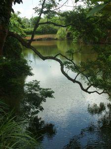 銅鏡山林步道