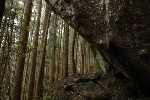 加里山:鹿場登山口
