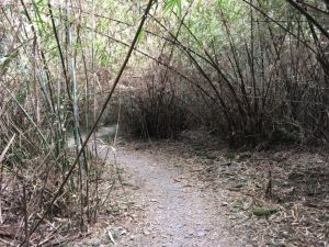 羅木斯登山步道