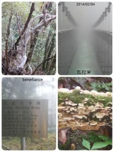 【最難忘的登山健行】瓦拉米步道-瓦拉米山屋