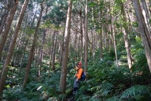 【新竹/尖石】走入夢幻森林之高島連稜縱走