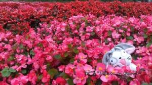 【春天時,我想去走的步道】東勢林場賞螢步道