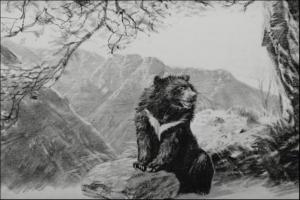 【短片】玉山育熊