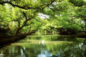 台灣亞馬遜河~四草綠色隧道