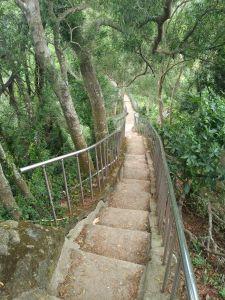 田中森林公園步道