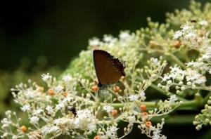【花蓮】走進瓦拉米古道 那段迴盪在山林裡的抗日史詩(下)