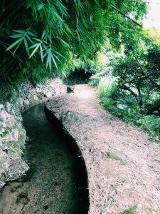 坪頂古圳親山步道