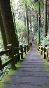 奮起湖杉林木棧道