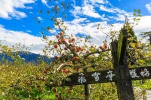 20161127 福壽山農場