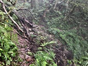 雨後泥灘路上美鹿拔刀爾山