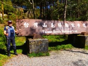 【季節限定】台灣黃金山毛櫸步道
