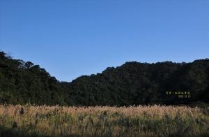 【新北市】山上的大草地桃源谷草原