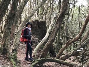 高島縱走之奇幻森林